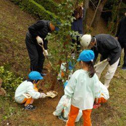 つばきの植樹祭り開催しました